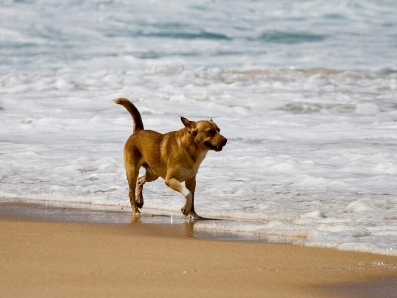 Your dog's skin needs this after a beach day!