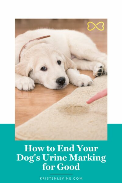 You can end your dog's urine marking for good!