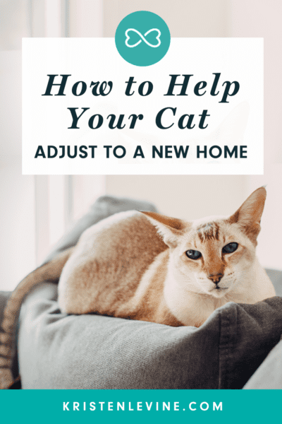How to Help Your Cat Adjust to a New Home