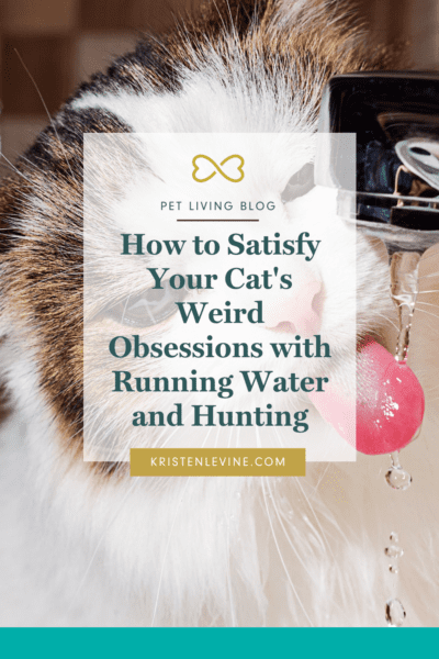 Cat's love to hunt. Here's how to satisfy their obsessions.