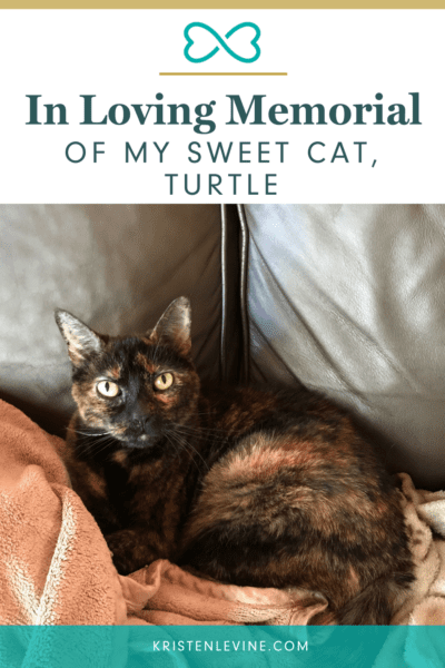 Losing a pet is never easy. Here is to my sweet cat, Turtle!