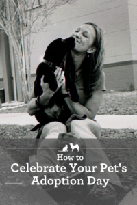 Tips on making your adoption day special.