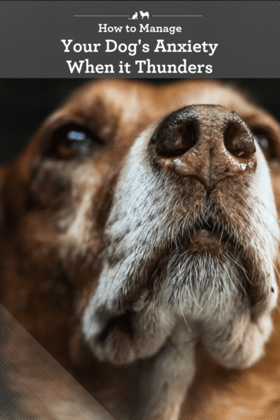 Help your dog deal with anxious feelings when it thunders.