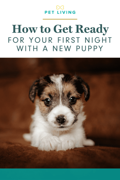 How to get ready for your first night with a new puppy