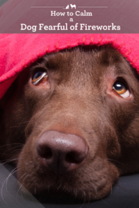How to calm your dog who is fearful of fireworks.