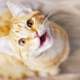 Is your cat's non-stop meowing driving you purr-fectly crazy? Here is why.