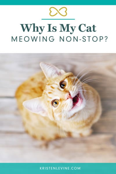 Why is my cat meowing non-stop?