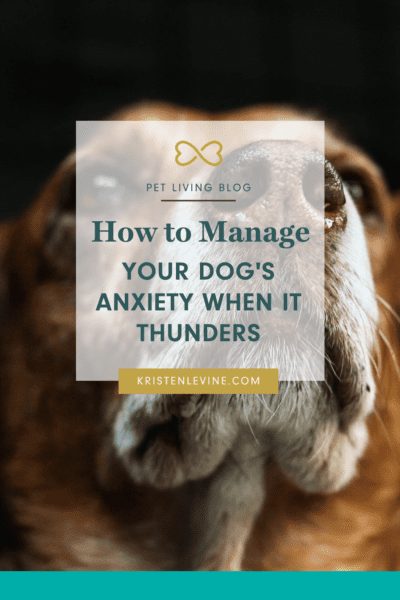 Does your dog get anxious at the first sound of thunder? Here's how to help.
