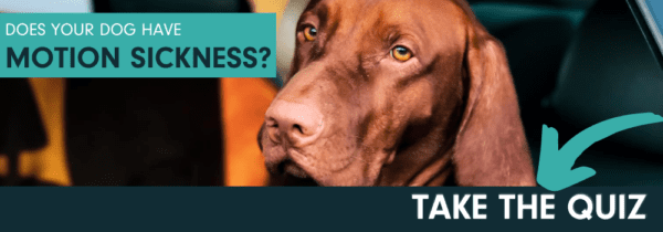 Talk to your vet about CERENIA for motion sickness in dogs.