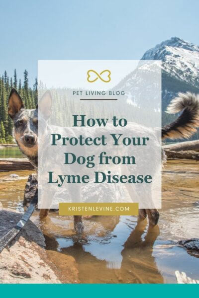 Lyme disease is something all pet parents need to be aware of.