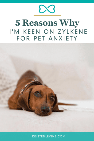 Does your pet suffer from anxiety? You need this to help!