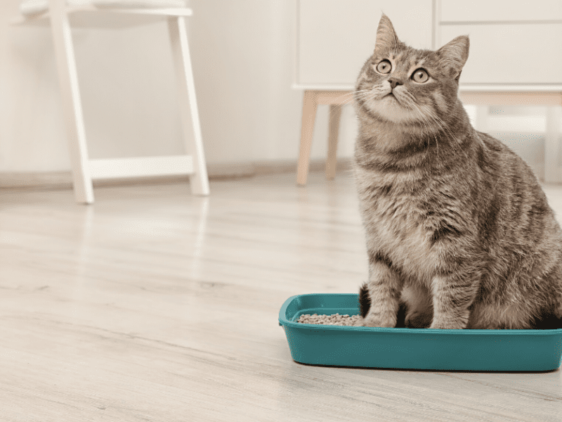 Tired of a messy litter box? Here are six things you need to know.