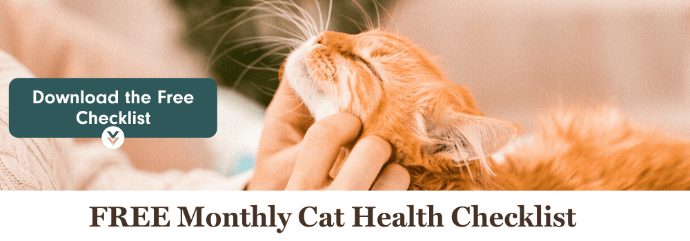 Stay on top of your cat's health! Download the free monthly cat health checklist.