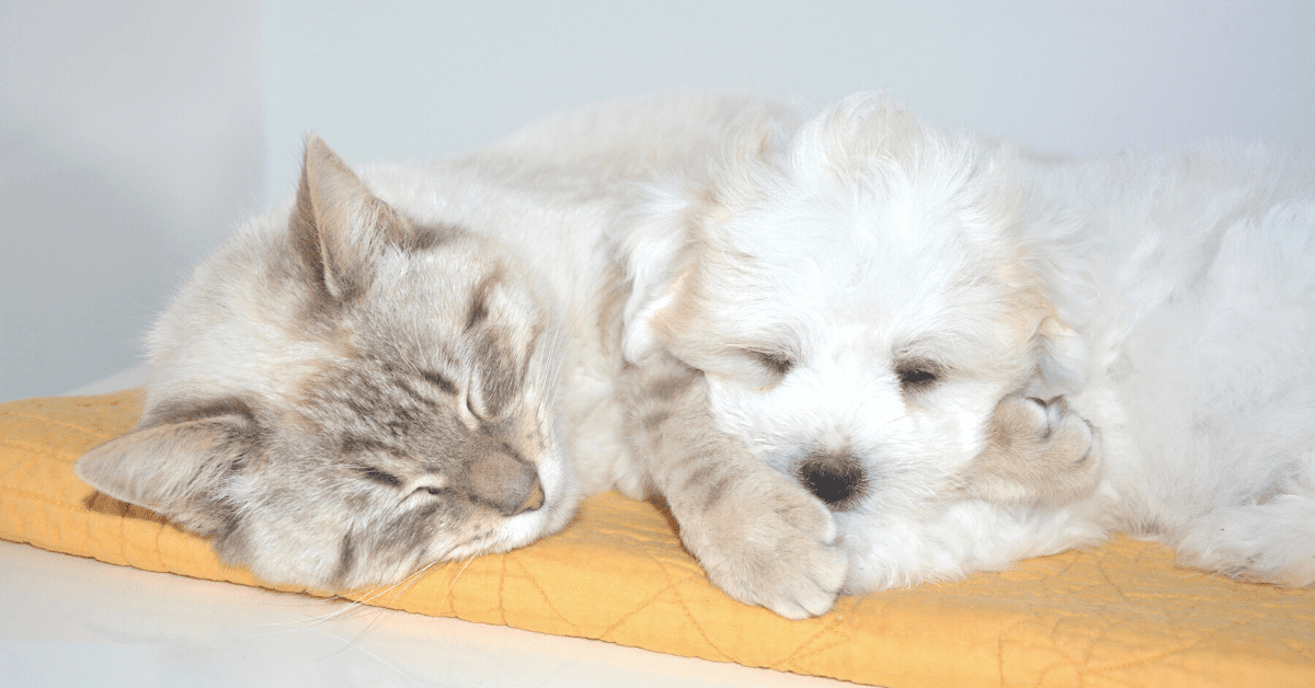 Best calming treats for cats and dogs