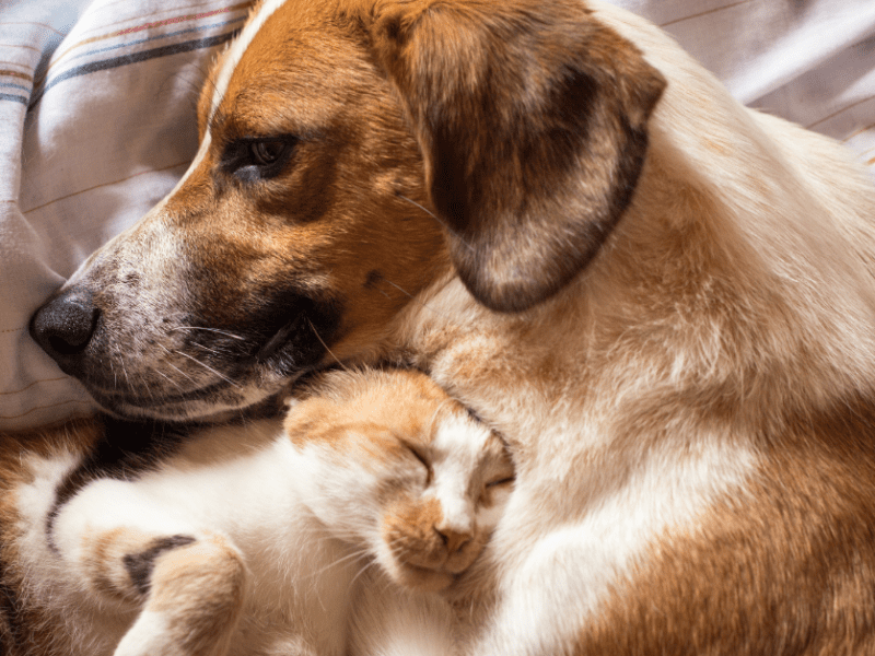 See how pets are able to stay calm despite pet anxiety.