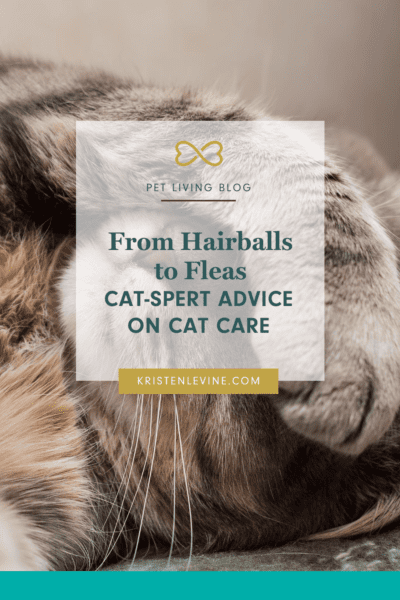 Here is all the expert advice you need on cat care, from hairballs to fleas.