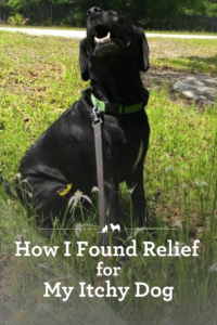 Get your dog relief from his itchy skin!