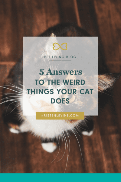 Does your cat have purr-plexing behaviors? Here's why!
