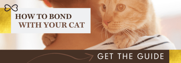 Get your cat bonding guide here.