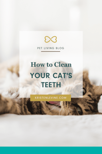 How to clean your cat's teeth the right way