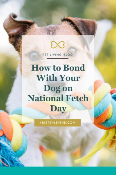 Fetch this: How to Bond With Your Dog on National Fetch Day