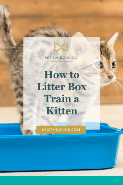New kittens need lots of attention. These tips will make litter box training easy!