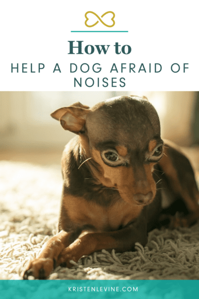 Signs of noise aversion in dogs
