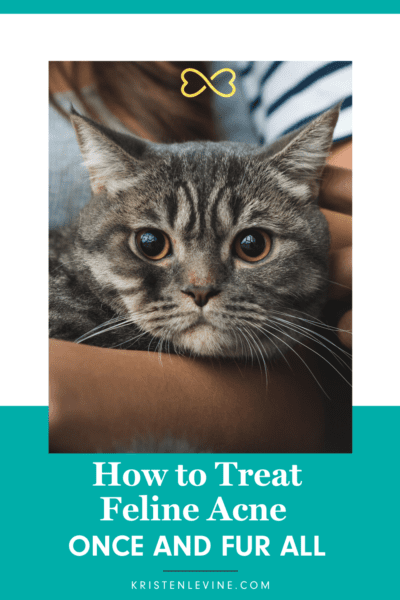 How To Treat Feline Acne Once And Fur All