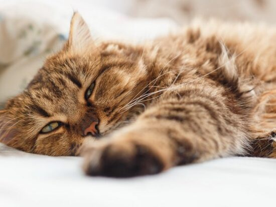 Kidney disease in cats can be scary, but these tips can help!