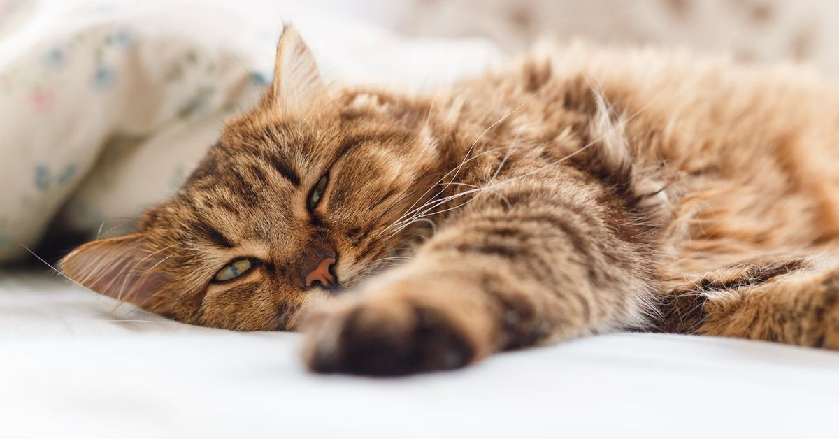 What You Need To Know About Your Cat S Kidney Disease Kristen Levine Pet Living
