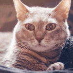 How to Help Your Senior Cat Cope with Arthritis