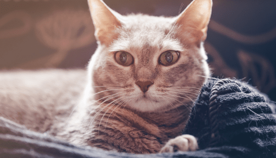 Follow these tips to help your cat cope.