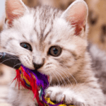 The 10 Most Purr-fect Toys for Your Kitten