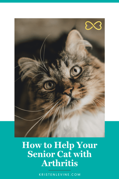 Cats can get arthritis too! Here is how to help.