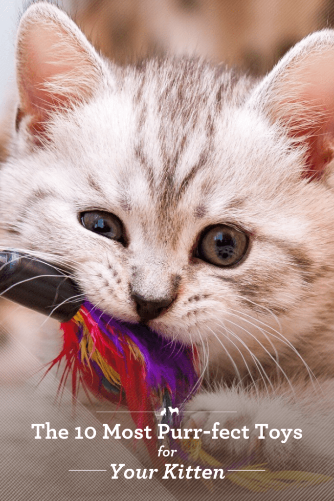 Keep your kitten happy with these toys!