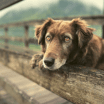 The Best Dog Supplement for Better Health