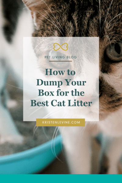 Solve your litter box issues with the best cat litter!