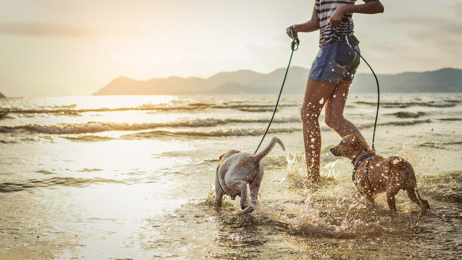 pet accessories for taking dogs to beach