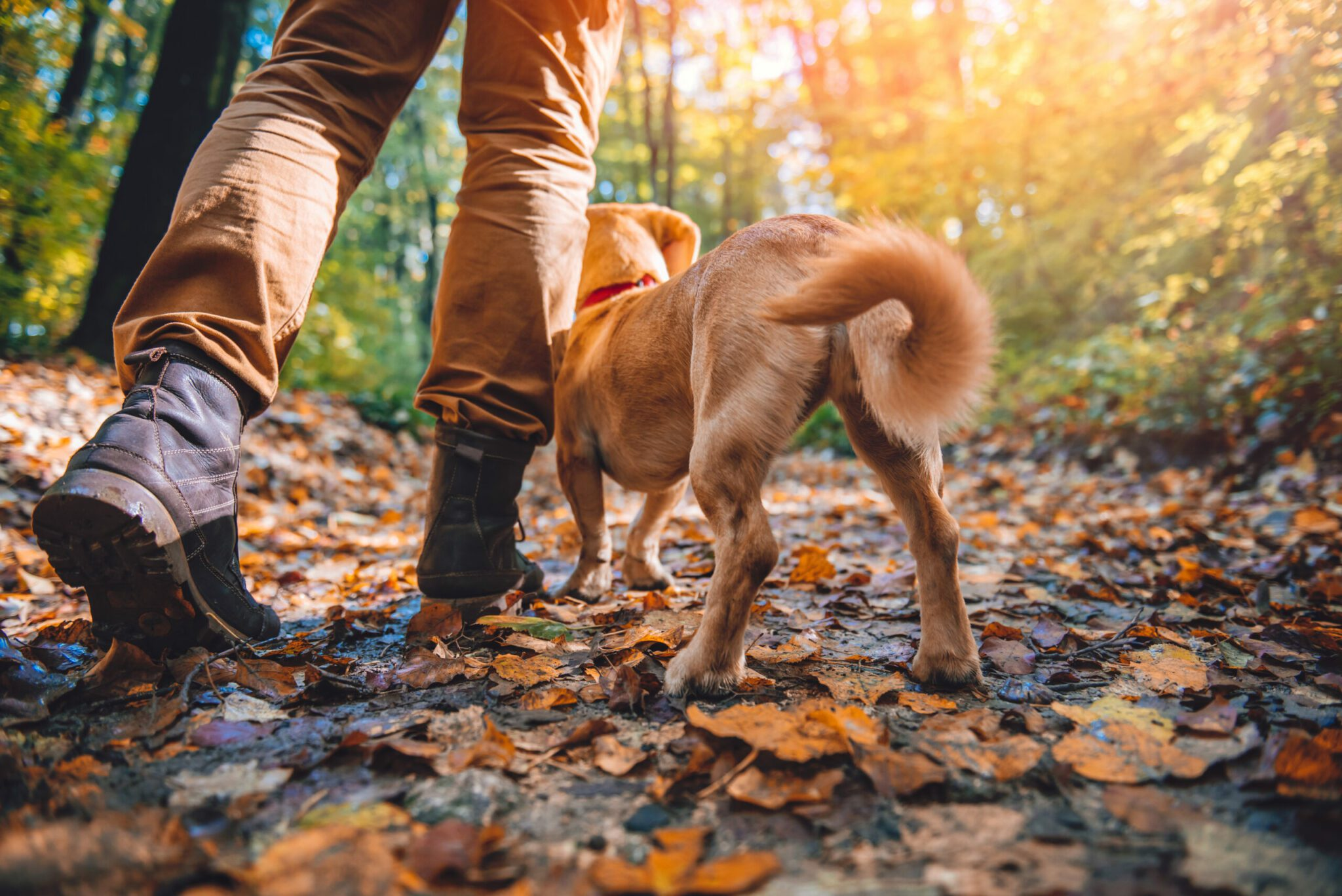 walking with dog pet advice