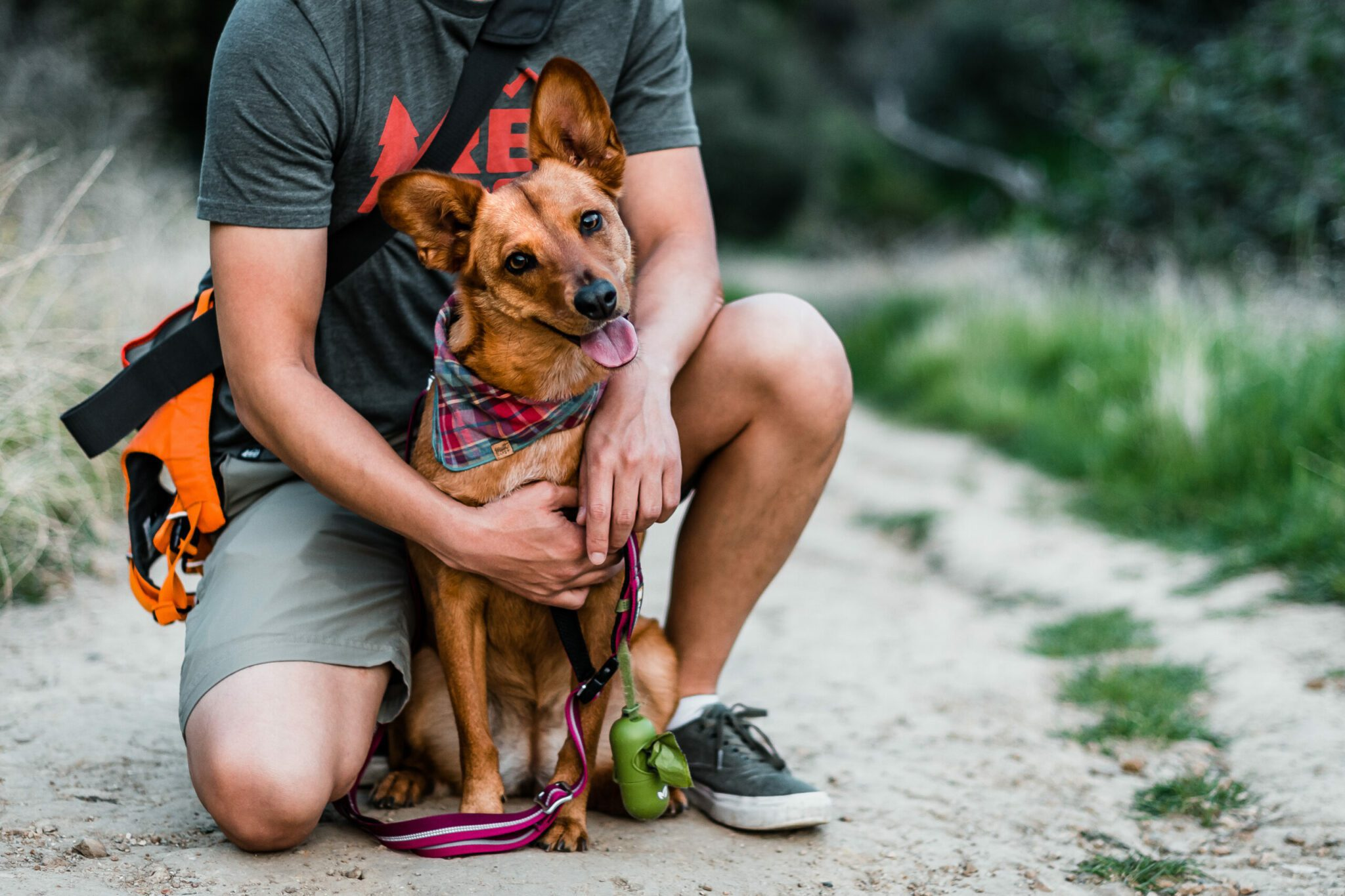 hiking with dog pet accessories