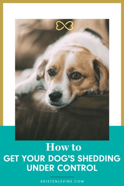 Dear Labby answers how to manage your dog's shedding