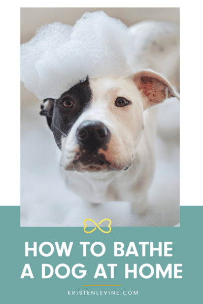 Bathe Your Dog At Home