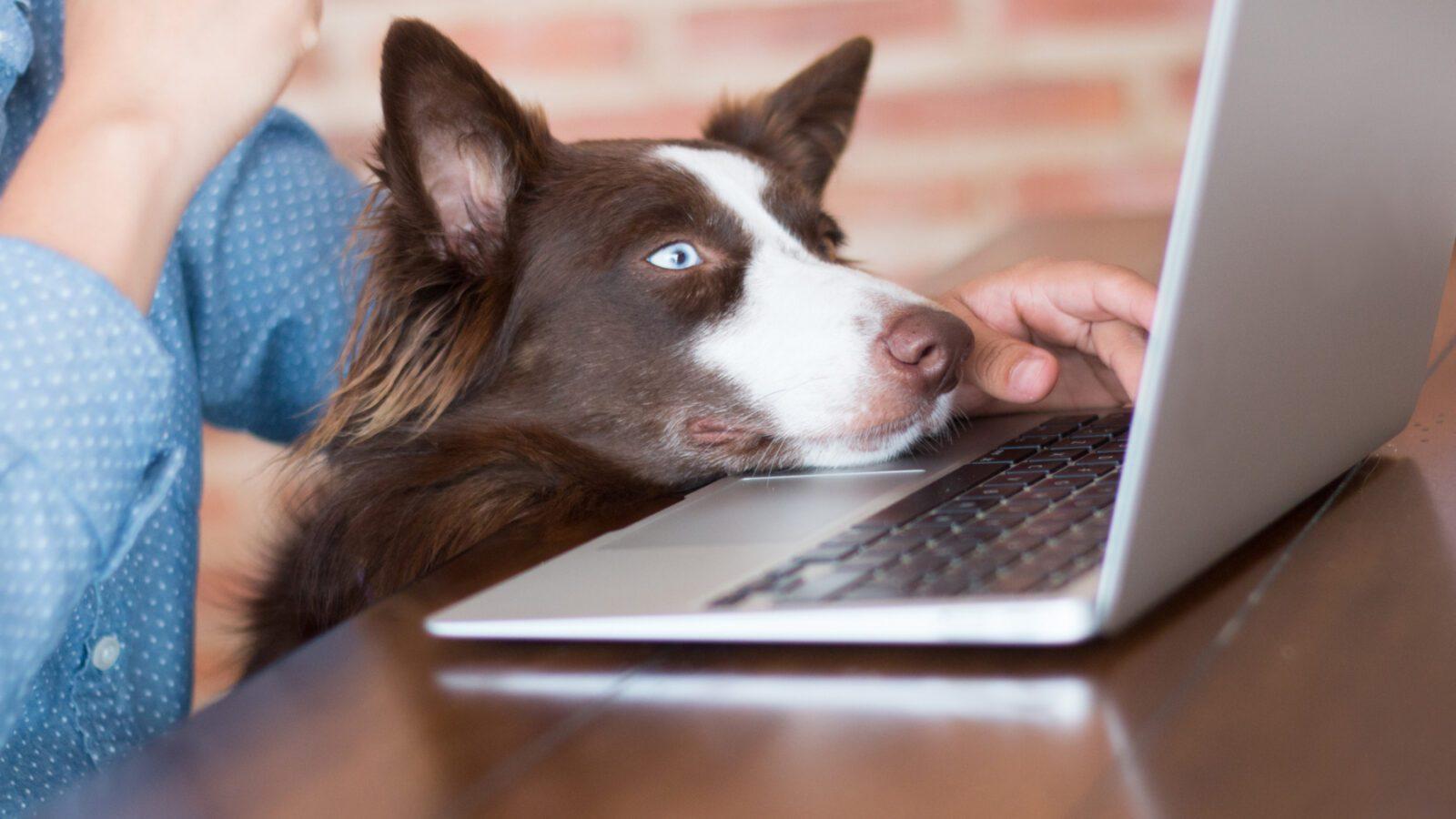 pet accessories shop online