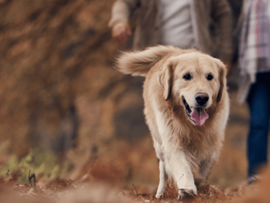 8 Signs Your Dog Has Arthritis and How to Treat It