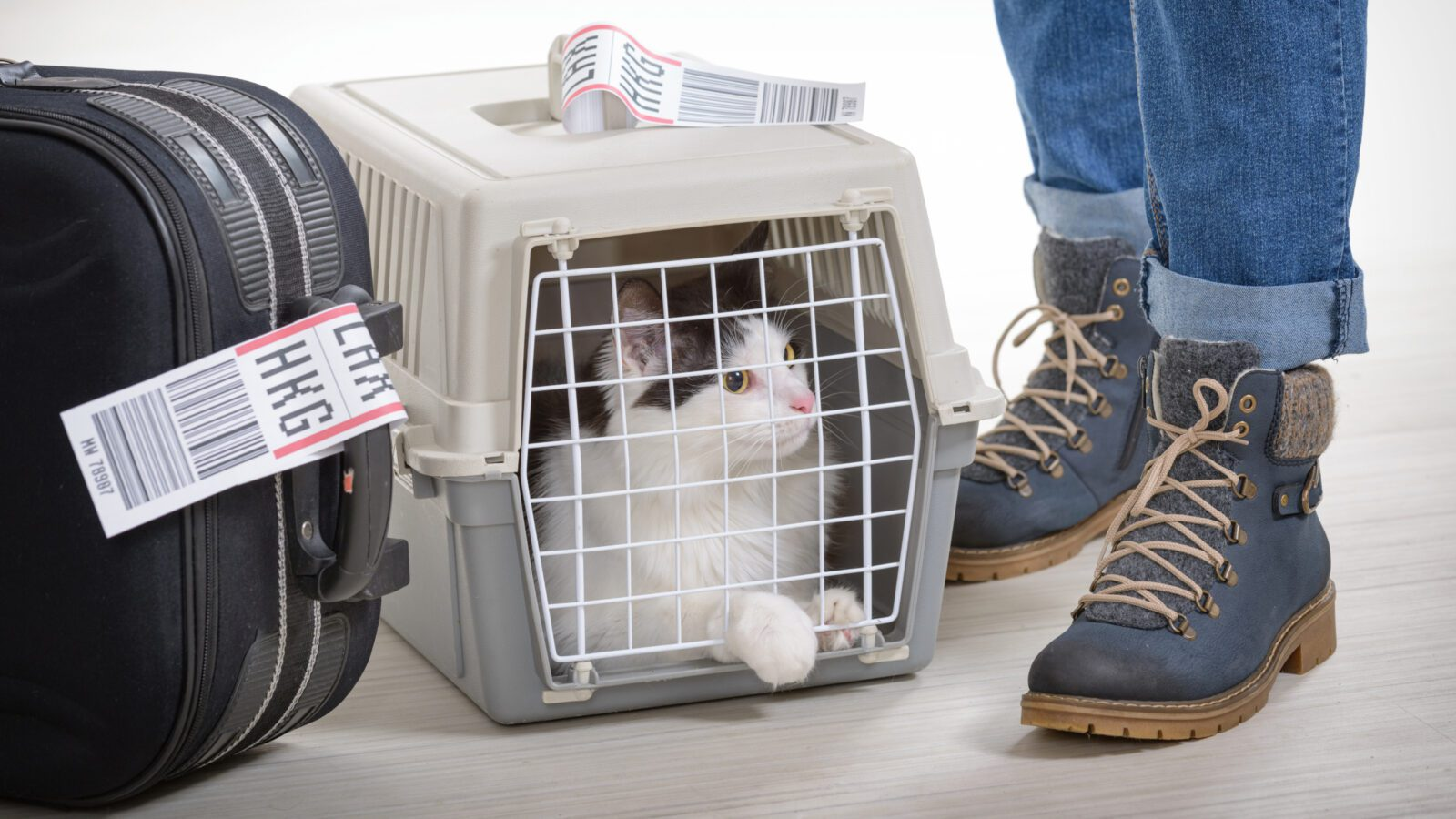 Black-and-white cat in a cream and grey cat carrier sandwiched between luggage with an LAX tag and the legs of its owner wearing low boots.