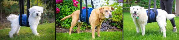 Mobility aids for dogs with arthritis.
