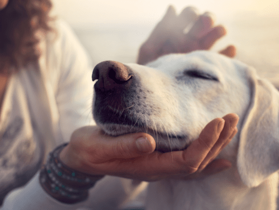 Everything You Need to Know About Hot Spots in Dogs