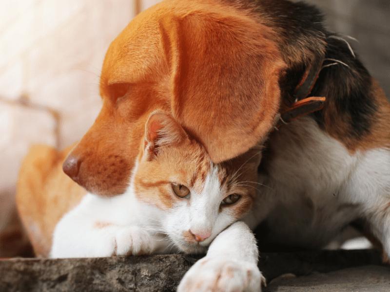 Anxious Pets