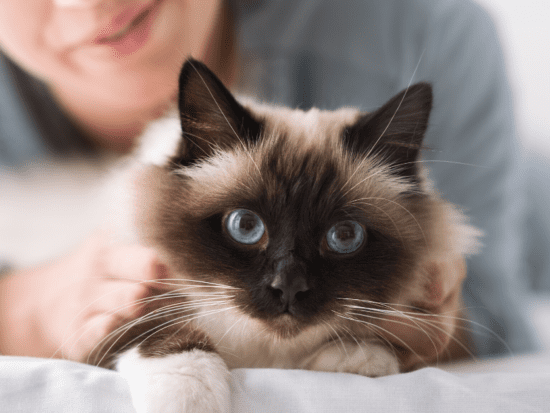 Check your Cat's Vital Signs