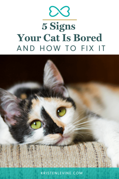 How to tell if your cat is bored.
